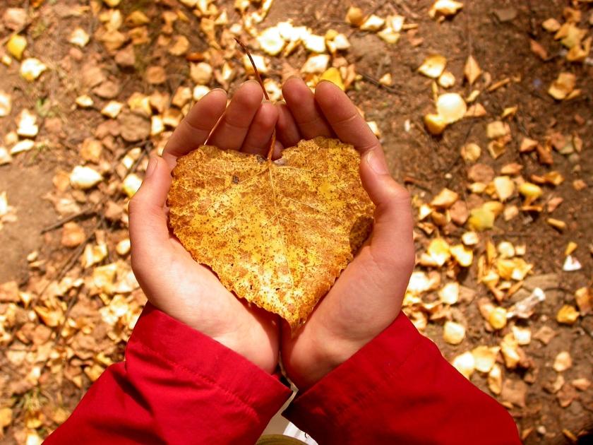 Heart-in-Hand-random-32817406-2272-1704